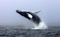 Veksfordas piekrastē var vērot vaļus