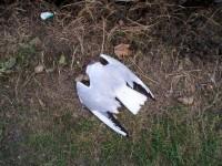 Latvijā notikusi ekoloģiska katastrofa