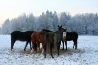 Iespējas sākt saimniecisko darbību Latvijas laukos