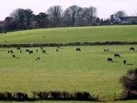 Īrijas lauksaimniecībā pieaug sieviešu īpatsvars