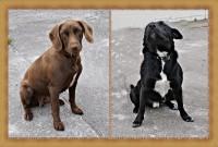 Meklē jaunas mājas Pliesmaņu ģimenes suņiem