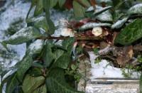Daudzviet Zaļajā Salā sniegs, gaidāms stiprs vējš