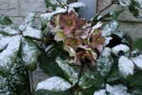 No trešdienas Zaļajā Salā gaidāmi ziemīgi laika apstākļi