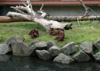 Dublin Zoo akcija - bērniem ieeja bez maksas