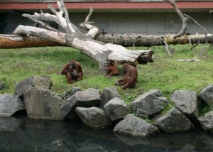 zoo-004