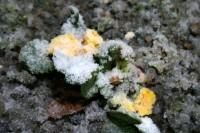 Nedēļas nogalē gaidāms stiprs lietus un vietām arī sniegs
