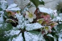Šī gada pēdējās dienās gaidāms sniegs, sals un lietus