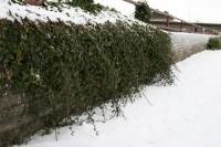 Ziemeļīrijā sniega dēļ slēgtas skolas, nekursē sabiedriskais transports