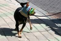 Sievieti tiesā par suņu turēšanas noteikumu pārkāpšanu