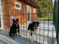 Saimnieku ērtībām - labiekārtota dzīvnieku viesnīca (Pāvilostas novads)