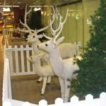 Lai novērstu Ziemassvētku eglīšu zādzības, Garda patrulēs arī naktīs un no gaisa