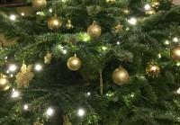 Ziemsvētki mežā
