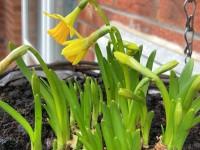 ELA aicina iešūpot pavasari