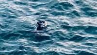 Atrasts, izglābts un nogādāts atpakaļ jūrā