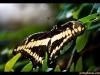 straffan_butterfly_farm-01