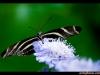 straffan_butterfly_farm-02