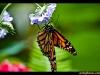 straffan_butterfly_farm-03