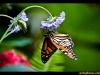 straffan_butterfly_farm-04