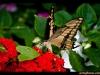straffan_butterfly_farm-05
