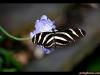 straffan_butterfly_farm-06