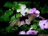 straffan_butterfly_farm-08