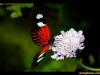 straffan_butterfly_farm-09