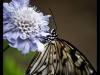 straffan_butterfly_farm-2